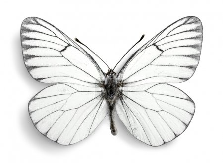 cute white butterfly