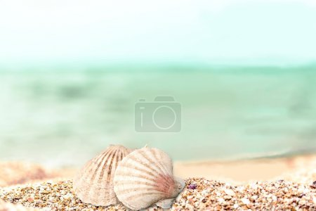 Photo for Shells in the sand on the beach background - Royalty Free Image