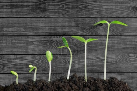 Photo for Growth of new life on  background - Royalty Free Image