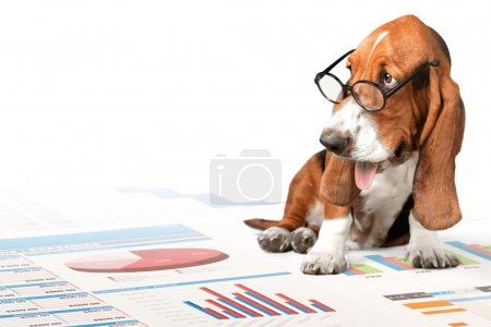 Basset Hound dog and business graph