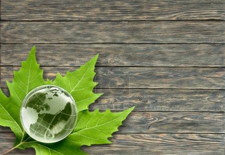 glass globe and green leaf