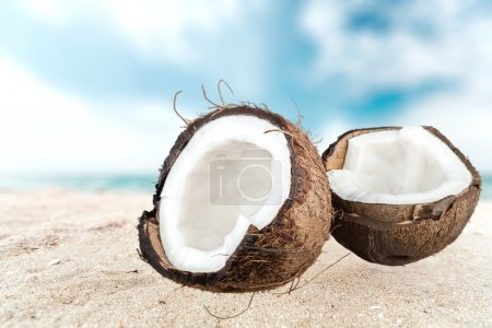 Coconut, Tropical Climate, Fruit.