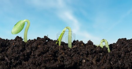 Photo for Grow, growing, sprout. - Royalty Free Image