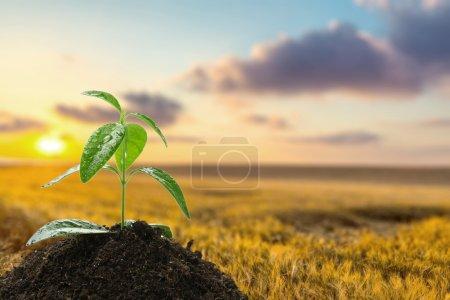 Photo for Plant, Bud, Sunflower. - Royalty Free Image