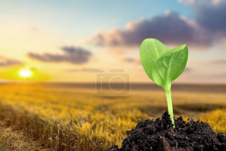 Photo for Seedling, Plant, Growth. - Royalty Free Image