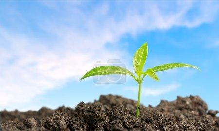 Foto de Crecimiento, Jardinería, Plántulas . - Imagen libre de derechos