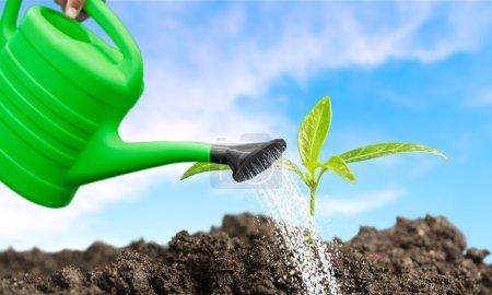 Growth, Gardening, Seedling.