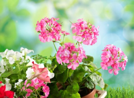 Gardening, garden, flowerpot.