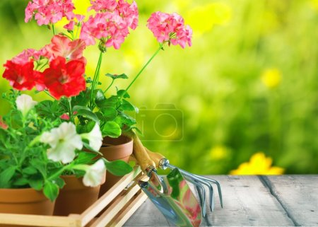Photo for Gardening, garden, flowerpot. - Royalty Free Image