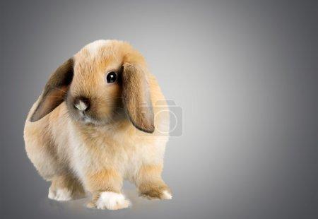 Rabbit, Animal, Pets.