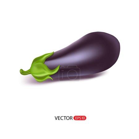 Big fresh eggplant