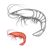 Shrimp isolated on white photo-realistic vector illustration