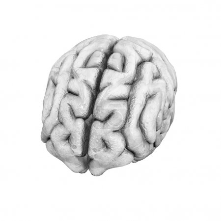 Human brain on a white background