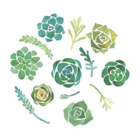 Watercolor succulent set