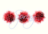 Watercolor carnation flowers