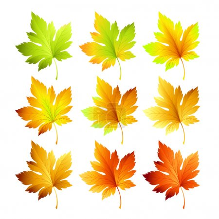 Illustration for Set of colorful autumn leaves. Vector illustration EPS 10 - Royalty Free Image