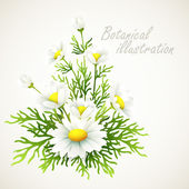 Botanical vector illustration Vintage floral card