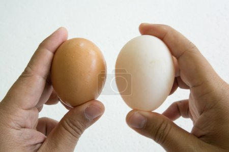 egg hand hold one human thumb