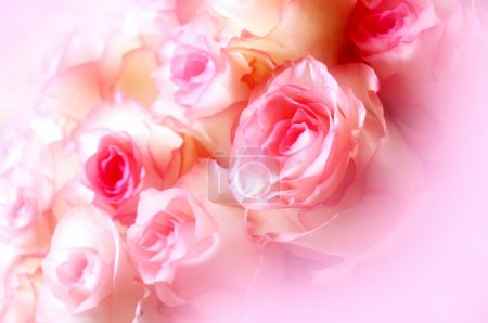 Photo for Large bright bouquet of freshly cut big beautiful white-pink roses - Royalty Free Image