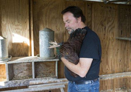 Farmer Checking The Feet Of A Free Range Chicken