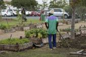 Community Garden in Somerset West South Africa