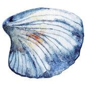Watercolor sea shell isolated clip art vector