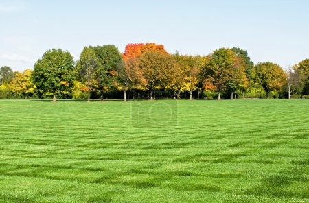 Lawn with Fall Trees