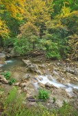 Mountain Creek in autumn forest