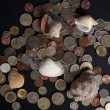 Various sea shells and coins on black background...