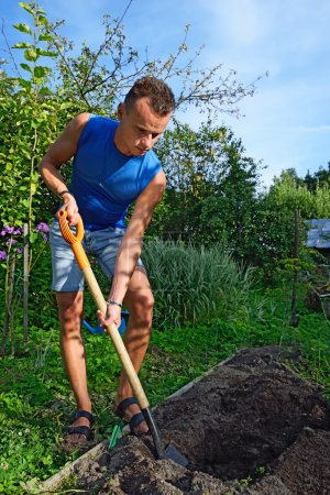 A young man digs a hole to plant in the flower bed on the plot