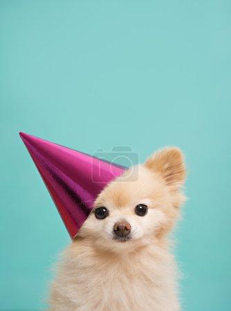 Dog with birthdau hat at blue background