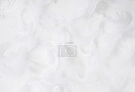 white feathers on white background