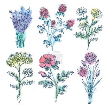 Watercolor Vintage Beauty Flowers