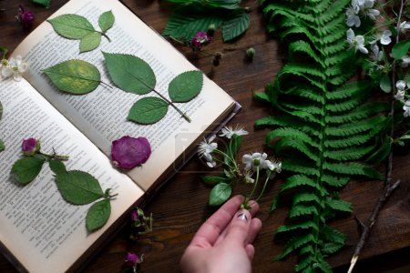 floral mix of fresh cuted, pressed and dried spring flowers and leafs all decorated in rustic style on dark wood background with female hand arranging all soft focus overhead-angle shot