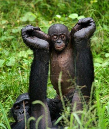 Two Young Chimpanzee