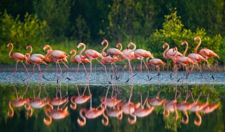 Pink flamingos outdoors