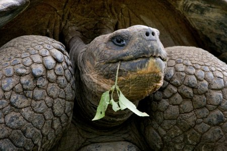 Tortoise with green plant