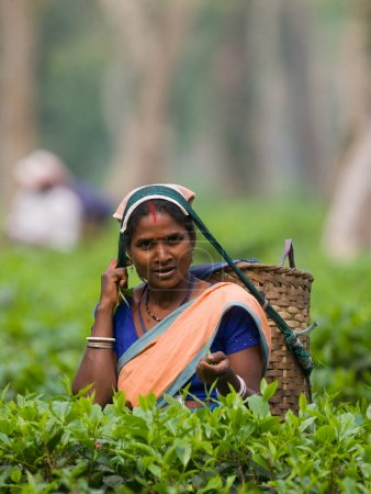 Photo for INDIA,ASSAM, APRIL,13, Portrait of smiling indian woman on tea plantation, India, Assam,13.04.2011, - Royalty Free Image