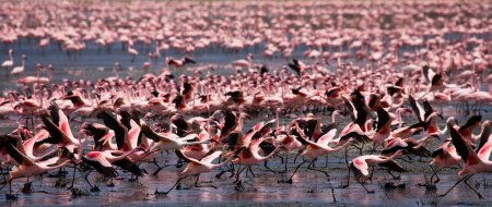 Pink flamingos outdoors