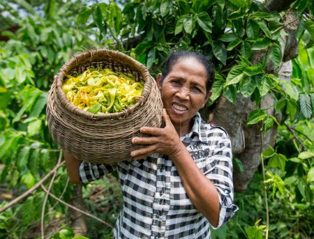 Woman on ylang ylang plantation