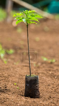 Green sprout of plant