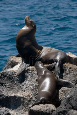 Two of sea lions lying on the sand