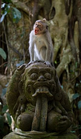 Macaque sitting on stones in the temple