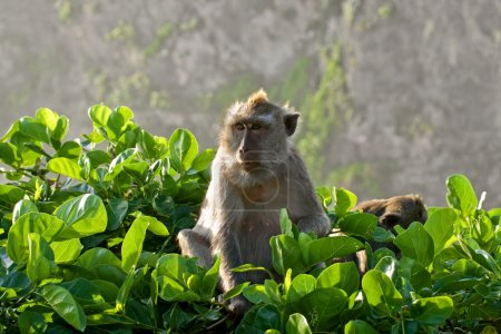 Macaque sitting on a tree.
