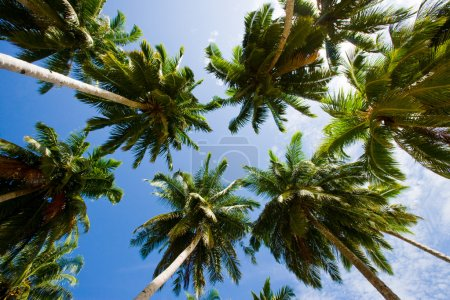 Palm trees on the background of a beautiful blue s...