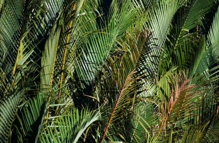 Green palm tree branches