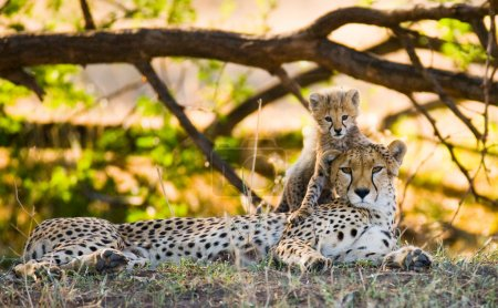 Mother Cheetah with her cub