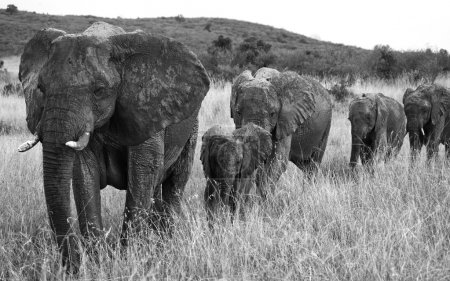 adult elephants with cube
