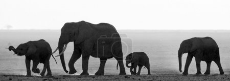 Silhouette of elephants with cub