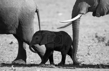 Two adult elephants with cube